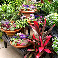 send Indoor plants Lake Forest (IL)